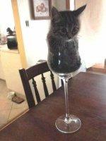 kissa_lasissa.jpg