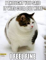 i-thought-you-said-it-was-cold-out-here-i-feel-fine-fat-cat.jpg
